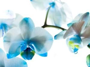 Бизнес на выращивание орхидей