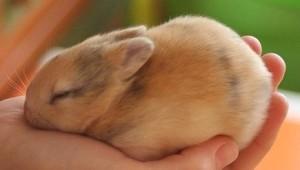 домашний бизнес на выращивание декоративных кроликов