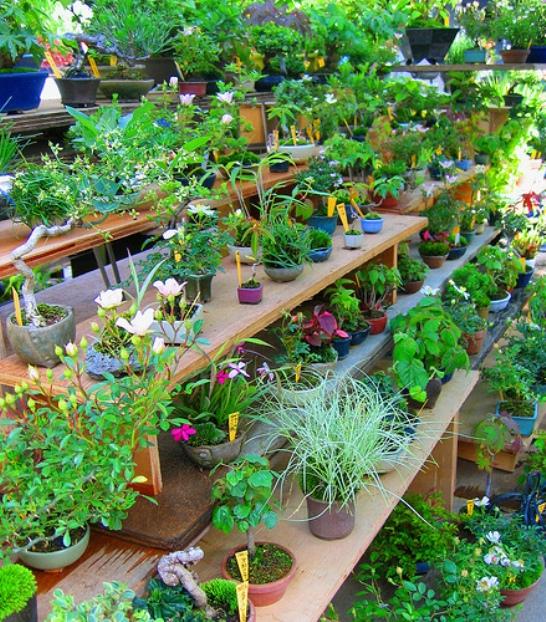 Малый бизнес на продаже растений